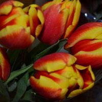 Тюльпаны. :: zoja