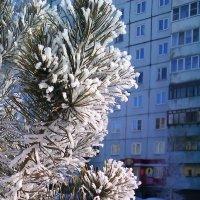 Туман на масленицу. :: юрий Амосов
