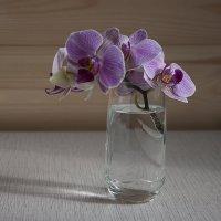 Орхидейно-весенняя :: Елена Попова
