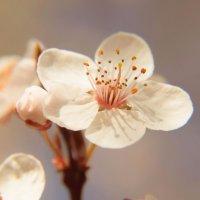 Весна на Кавказе :: Олеся Енина