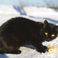 и коту масленица) :: Наталия Ремизова