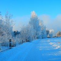 Яркие краски морозной зимы:) :: Владимир Звягин