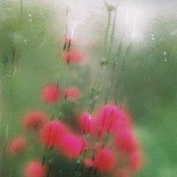 Цветы на балконе :: Валерий Талашов
