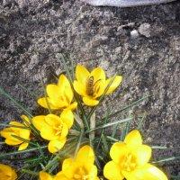 первая пчелка :: Людмила