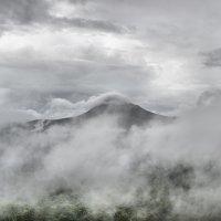 туман :: Olga Veisman