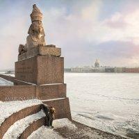 Сфинкс в Санкт-Петербурге :: Юлия Батурина