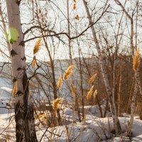 Последние дни зимы :: Игорь Желтов