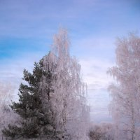 Мороз :: Александр