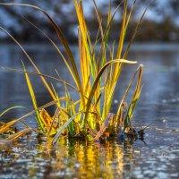 На озере :: Игорь Желтов