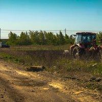 Весенние трудяги :: Рома Григорьев