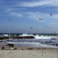 Море и птицы ( 2 ) :: Людмила