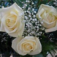 ...Шепчет нам красная роза о страсти,   Белая роза - о нежной любви.... :: Galina Dzubina