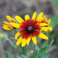 Желтый цветок :: Сергей Тагиров