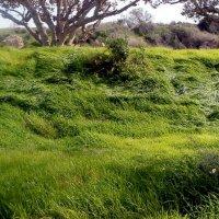 Травы,травы....... :: Герович Лилия