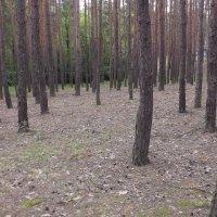 лес :: Ольга Монастырёва