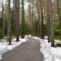 Петляет дорога по лесу :: Милешкин Владимир Алексеевич