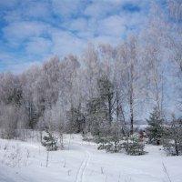 Зимний лес :: Elena Moskina