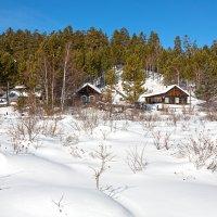 Среди снегов белых :: Анатолий Иргл