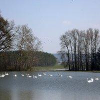 Лебединое Озеро... :: Эдвард Фогель