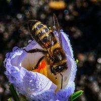 пчелка майя :: ALEXANDR L