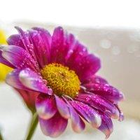 Flower :: Rina .