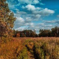 Уж небо осенью дышало :: Виктор Куприянов