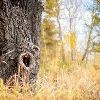 Дедушка дерево :: Елена Дорогина