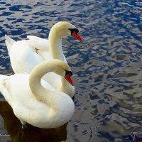 О лебединой верности :: Nina Yudicheva