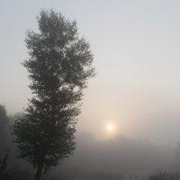 Утро туманное :: Сергей Огарёв