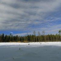 После вырубки леса :: Екатерррина Полунина