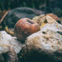 Nature Morte :: АЛЕКСЕЙ ФОТО МАСТЕРСКАЯ
