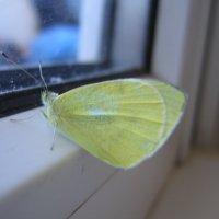 Зимняя бабочка :: Евгений В