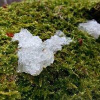 Весенние грибочки. :: Валерия Комова