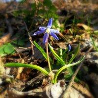 Весна пришла... :: Сергей Петров