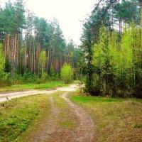 весенний лес :: Леонид Натапов