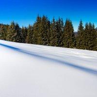Карпаты.Нетронутая снежная гладь. :: Евгений Малюга