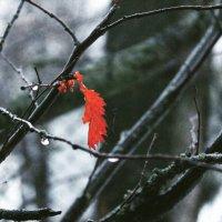 капля краски в таком дождливом дне :: Jeny Gurina