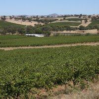 Знаменитые виноградники Австралии :: Антонина
