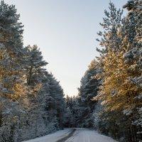 Зима :: Илья Романов