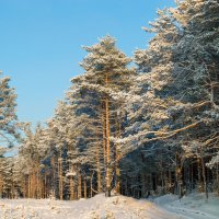 Зимний лес :: Илья Романов