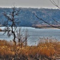 Гуляя по краю озера... :: Алла Рыженко