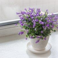 Весна на окне :: Elena Ignatova