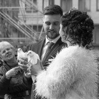 Любовь и голуби (с) :: Elen Dol