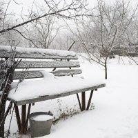 Зимний сад :: Сергей Огарёв