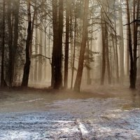 Апрелем мартовский туман... :: Лесо-Вед (Баранов)