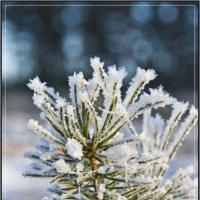 Снежинки :: ivan ivanovich