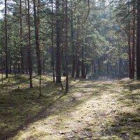 лес :: Julia