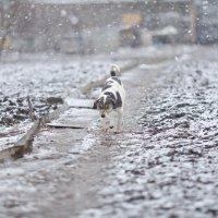 Под мартовским снегом. :: Алексей Хаустов