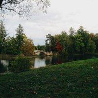 Осень. :: Дарья Гречина