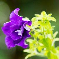 Цветок :: Виктор Куприянов